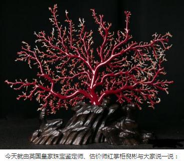 红珊瑚价格变化 受诸多因素的影响